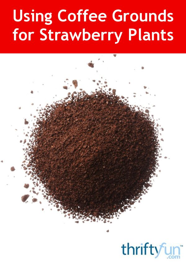 how much coffee grounds to use in soil instructions