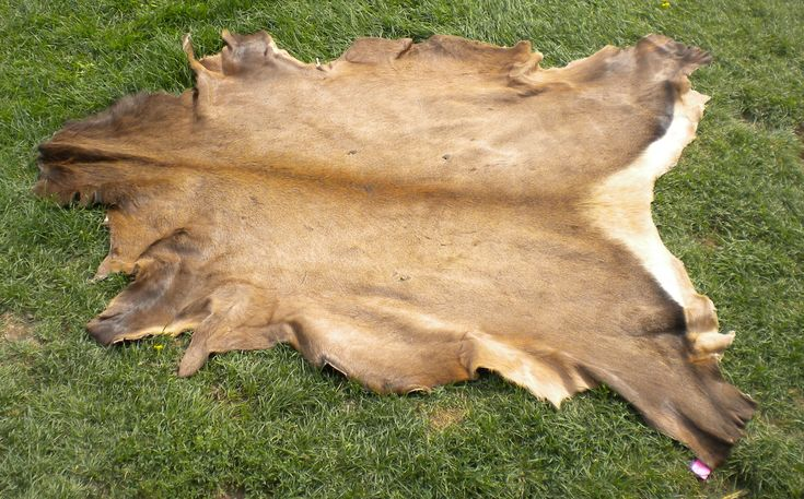 how to tan a moosehide instructions