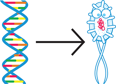what does dna hold the instructions to make