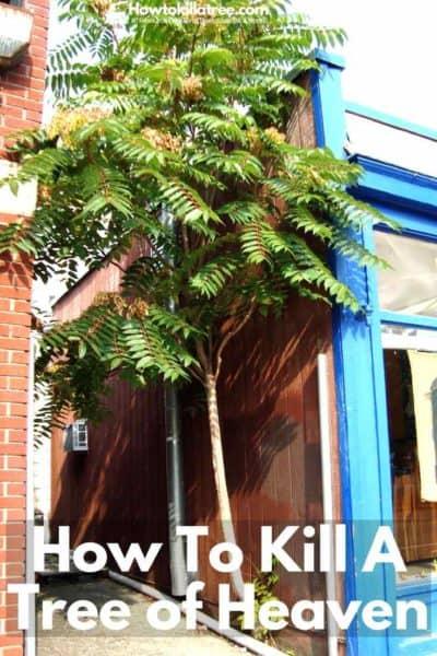 roundup tree stump killer instructions